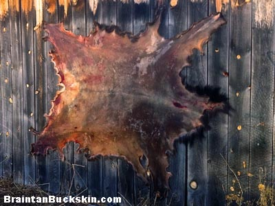 An elk hide tacked out to dry.