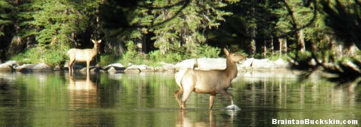 Two elk wading in a shallow lake.